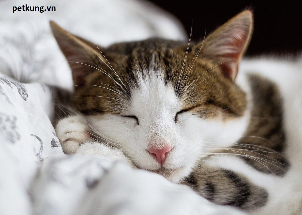 Cách chôn mèo mất - tất tần tật những điều phải biết