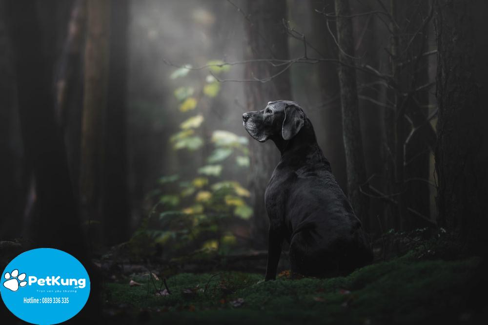 Trợ tử chó mèo - tất tần tật những điều cần biết