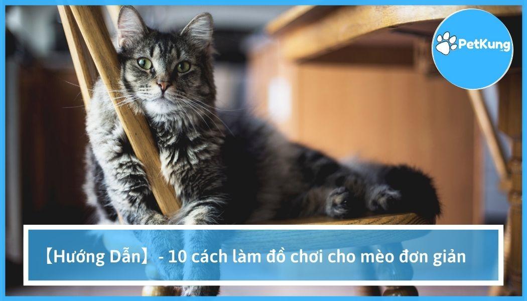 【hướng dẫn】- 10 cách làm đồ chơi cho mèo đơn giản