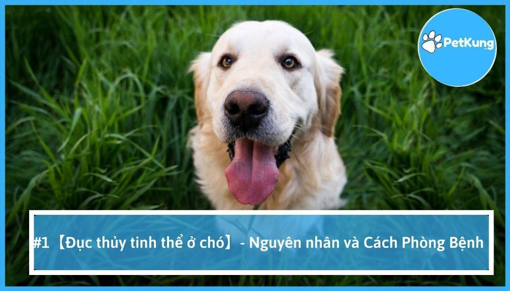 #1【đục thủy tinh thể ở chó】- nguyên nhân và cách phòng bệnh