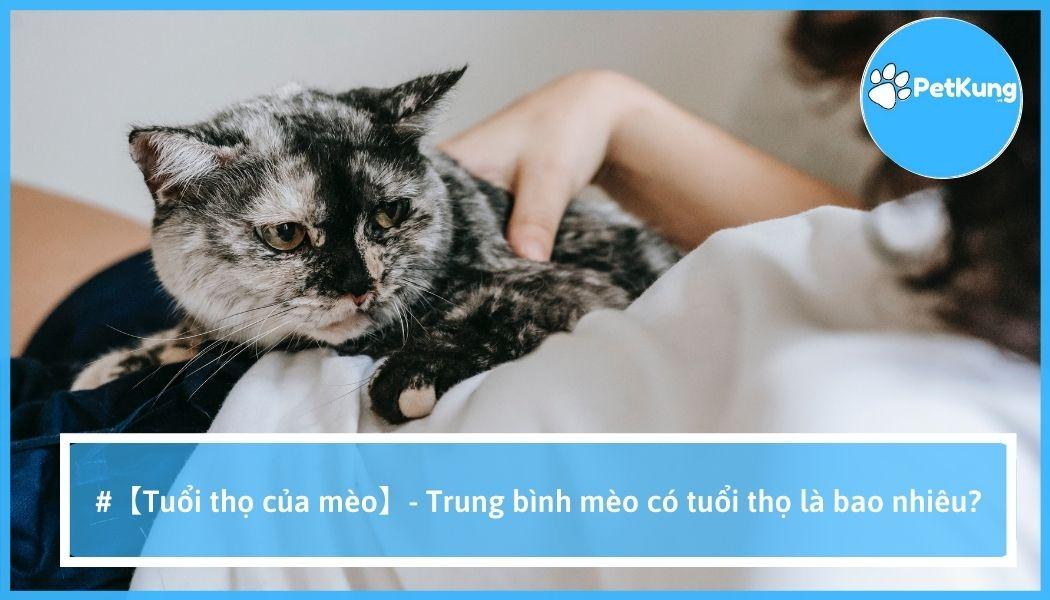 【tuổi thọ của mèo】- trung bình mèo có tuổi thọ là bao nhiêu?