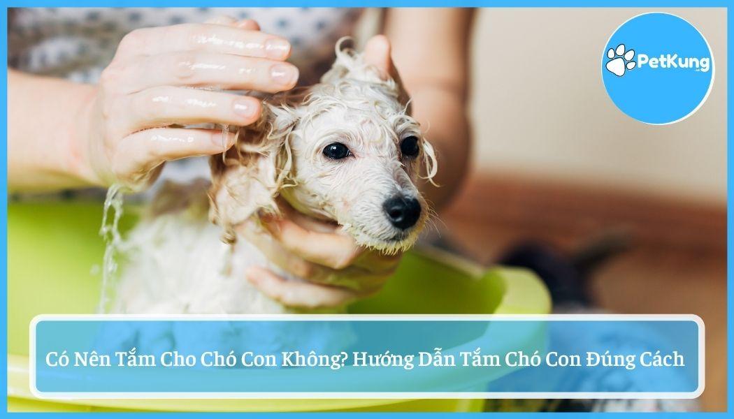 #1 có nên tắm cho chó con không? cách tắm chó con đúng nhất