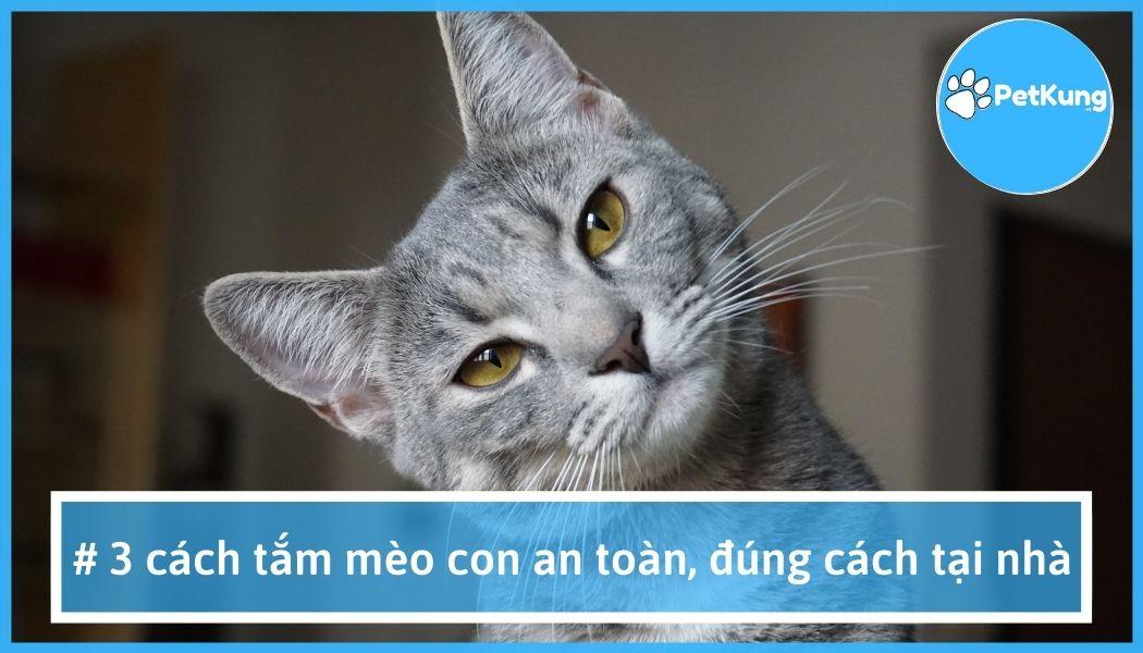 #1【 cách tắm mèo con】- an toàn, đúng cách ngay tại nhà
