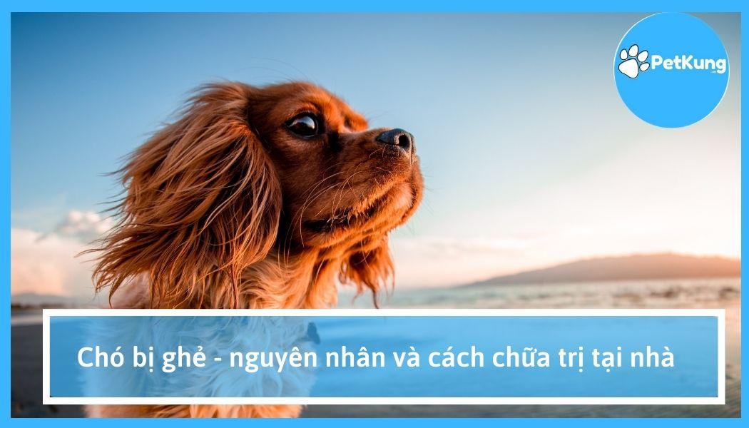 Chó bị ghẻ - nguyên nhân và cách chữa trị tại nhà
