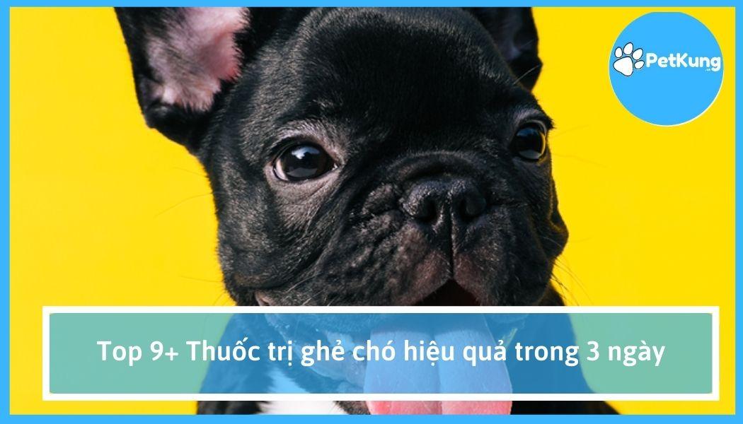 Top 9+ thuốc trị ghẻ chó hiệu quả trong 3 ngày