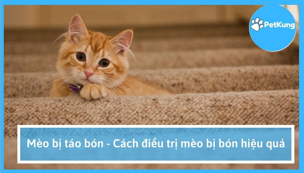 Mèo bị táo bón - cách điều trị mèo bị bón hiệu quả